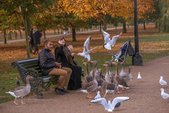 Bird feeding in Hyde Park, London in autumn. Royalty Free Stock Images
