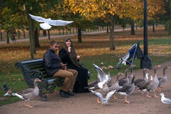 Bird feeding in Hyde Park, London in autumn. Royalty Free Stock Photography