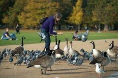 Bird feeding in Hyde Park, London in autumn. Royalty Free Stock Photos