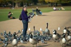 Bird feeding in Hyde Park, London in autumn. Royalty Free Stock Photography