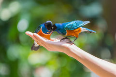 Bird Feeding Royalty Free Stock Images
