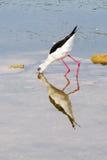 Bird feeding by sea Royalty Free Stock Photos