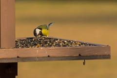 The bird feeds. On the seeds feeder Stock Photos