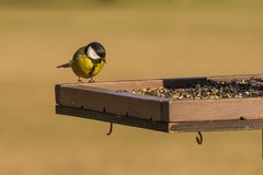The bird feeds. On the seeds feeder Royalty Free Stock Photo