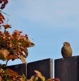 Bird on the Fence Stock Photos