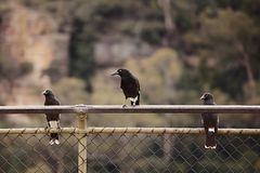 Bird on a fence Stock Images