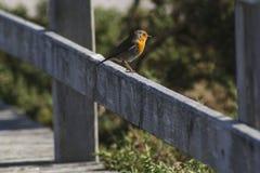 Bird on fence royalty free stock photos