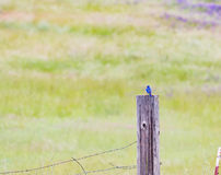 Bird on a fence post Stock Photography