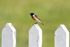 Bird on the fence Royalty Free Stock Image