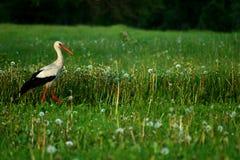 Bird in field Stock Photo