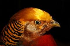 Bird of fire Royalty Free Stock Photos