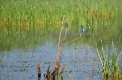 Bird fishing on branch Stock Photos