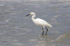 Bird fishing Royalty Free Stock Images