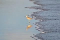 Bird fishing, Playa El Espino Royalty Free Stock Photos