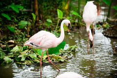 Bird Flamingo multiple combinations Stock Images