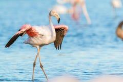 Bird, Flamingo, Water Bird, Beak Stock Photos