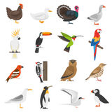 Bird Flat Color Icons Set Stock Image