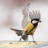Bird flew to eat Stock Images