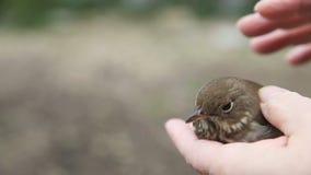 Bird that flew into window