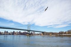 Bird Flies Over a Bridge. A seagull flies over a bridge royalty free stock photos