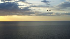A bird flies over the sea