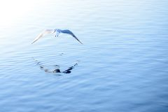 Bird flies over water. Sunny, summer season stock photo