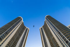 Bird flies between two skyscraper Stock Photo