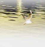 Bird in flight Stock Photos