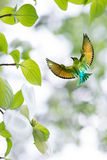 Bird in flight against bright sky spring concept Royalty Free Stock Photography