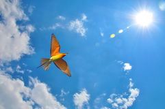 Bird in flight on blue sky Royalty Free Stock Photography