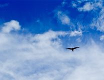 Seagull Soaring Across a Blue Cloud Filled Sky Royalty Free Stock Images