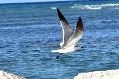 Bird in flight Stock Image