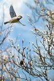Bird in flight spring concept vertical image Stock Photos