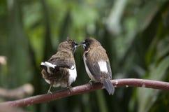 Bird flighting Stock Photos