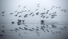 Bird flock reflecting. A flock of bird reflecting in a frozen lake Royalty Free Stock Photos