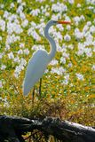 Bird flower. Aquatic white bird on flowers Stock Photography