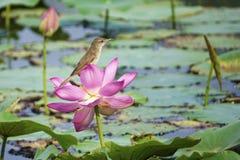 Bird and flower Royalty Free Stock Photos