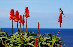 Bird, Flower & Ocean Royalty Free Stock Photography