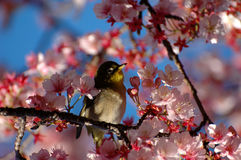 Bird between flowers Royalty Free Stock Photography