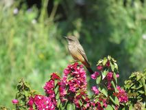 Bird on Flowers stock image