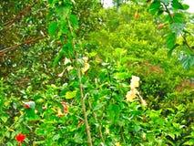 Olive-backed sunbird - flowers Royalty Free Stock Photo