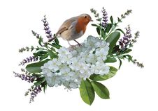 Bird and flowers. Bird with purple and white flowers isolated on white background Royalty Free Stock Photos