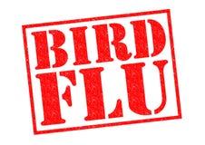 BIRD FLU Royalty Free Stock Images