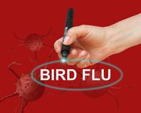 BIRD FLU Stock Images