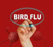BIRD FLU Royalty Free Stock Photo