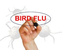 BIRD FLU Royalty Free Stock Photography