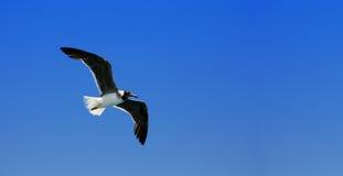 Bird fly Royalty Free Stock Photo