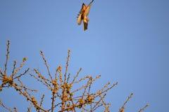 Bird fly away Royalty Free Stock Photos