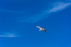 Bird Fly in The Blue Sky Royalty Free Stock Image