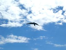Bird flying. A bird flying freely in the sky Stock Images